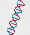 Genome (100x116)
